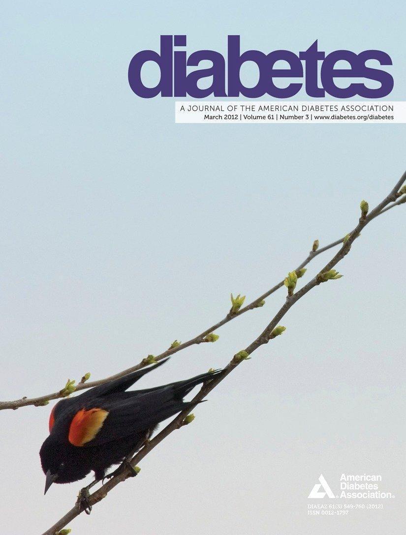 What Controls Insulin Release?