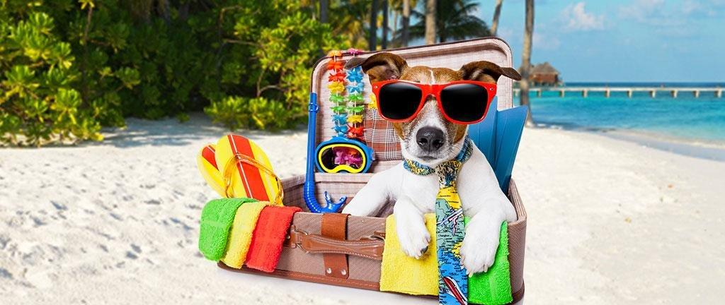 Traveling with Pets - Dr. Joi's Tips | ADW Diabetes