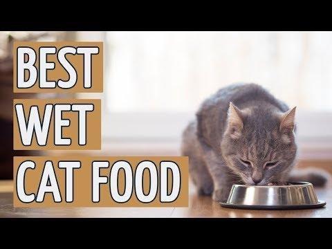 Wet Vs. Dry Cat Food