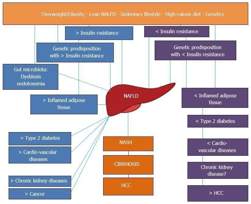 Liver And Diabetes A Vicious Circle