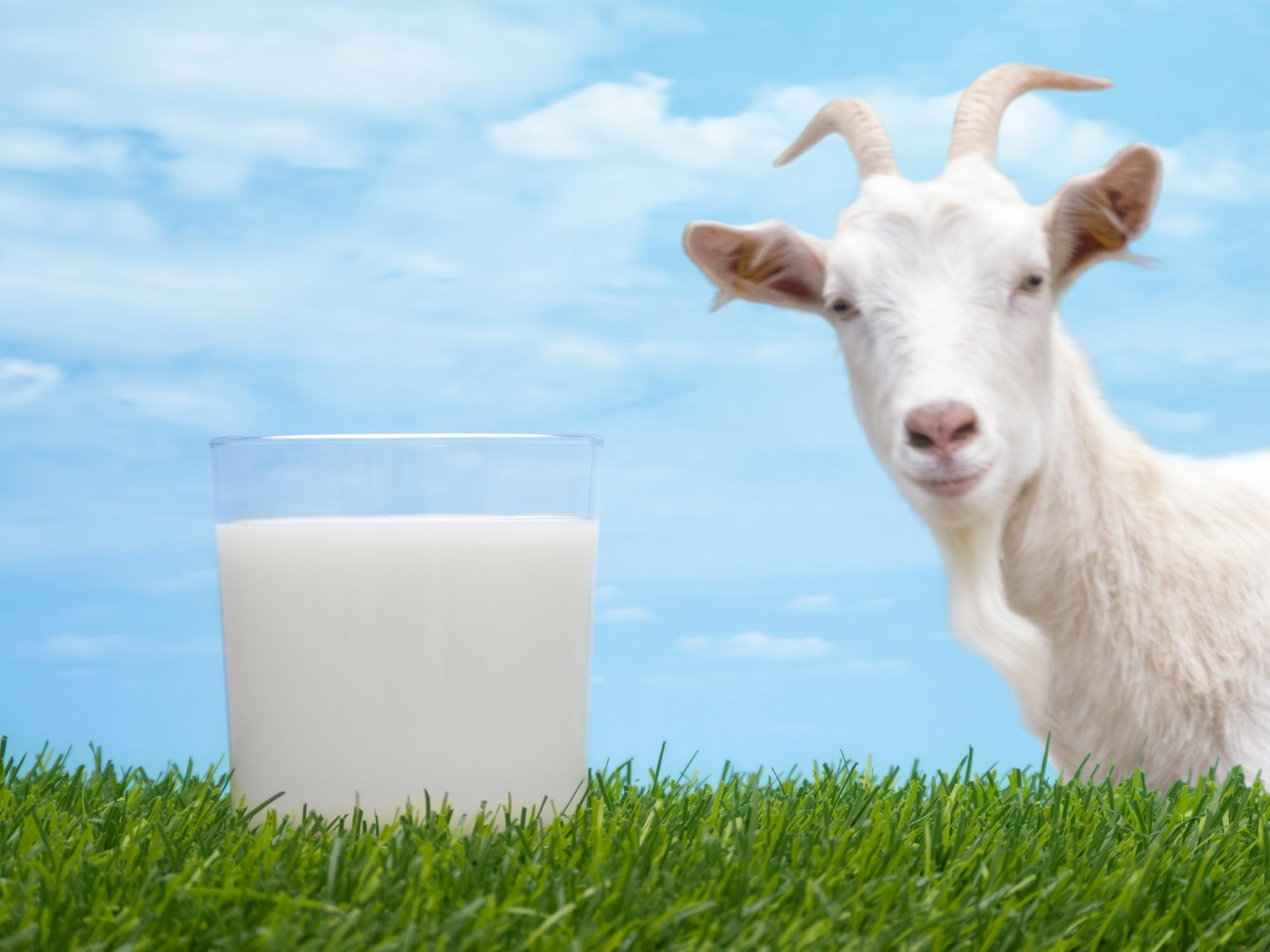 Why Goat Milk Is Best For Your Health