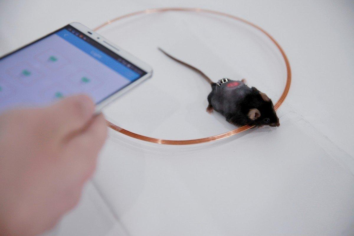 Smartphone-Controlled Cells Could Pump Insulin for Diabetics