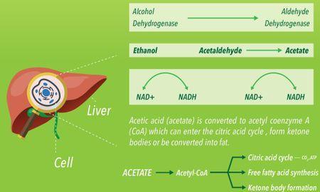 Ketosis And Alcohol Consumption