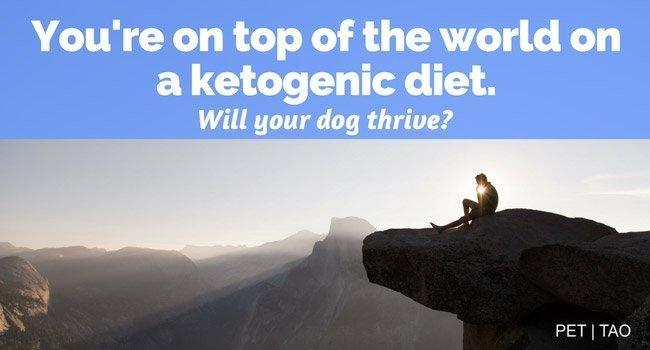 The Benefits And Dangers Of A Ketogenic Diet For Dogs