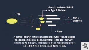 Diabetes in your DNA? Scientists zero in on the genetic signature of risk