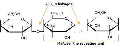 Polysaccharides - Carbohydates - University Of Maine