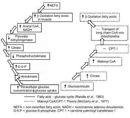 Pathways In The Coordination Of Cellular Glucose And Fat Metabolism