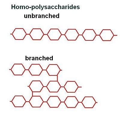 Structural Biochemistry/carbohydrates/polysaccharides