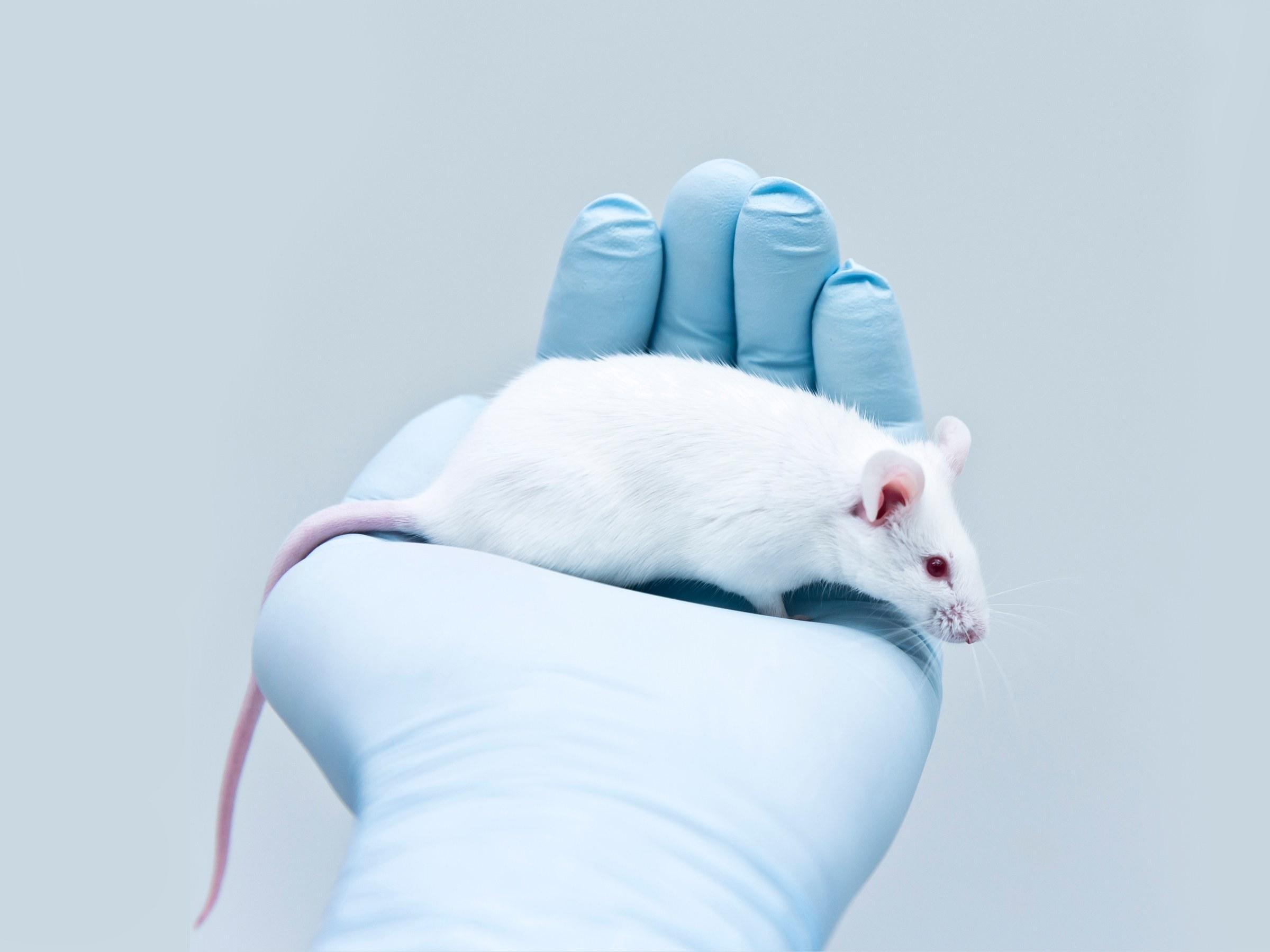 These Mice Stopped Eating Carbs So You (maybe) Don't Have To