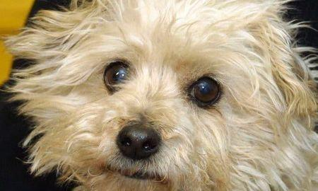 Caring for A Dog With Diabetes