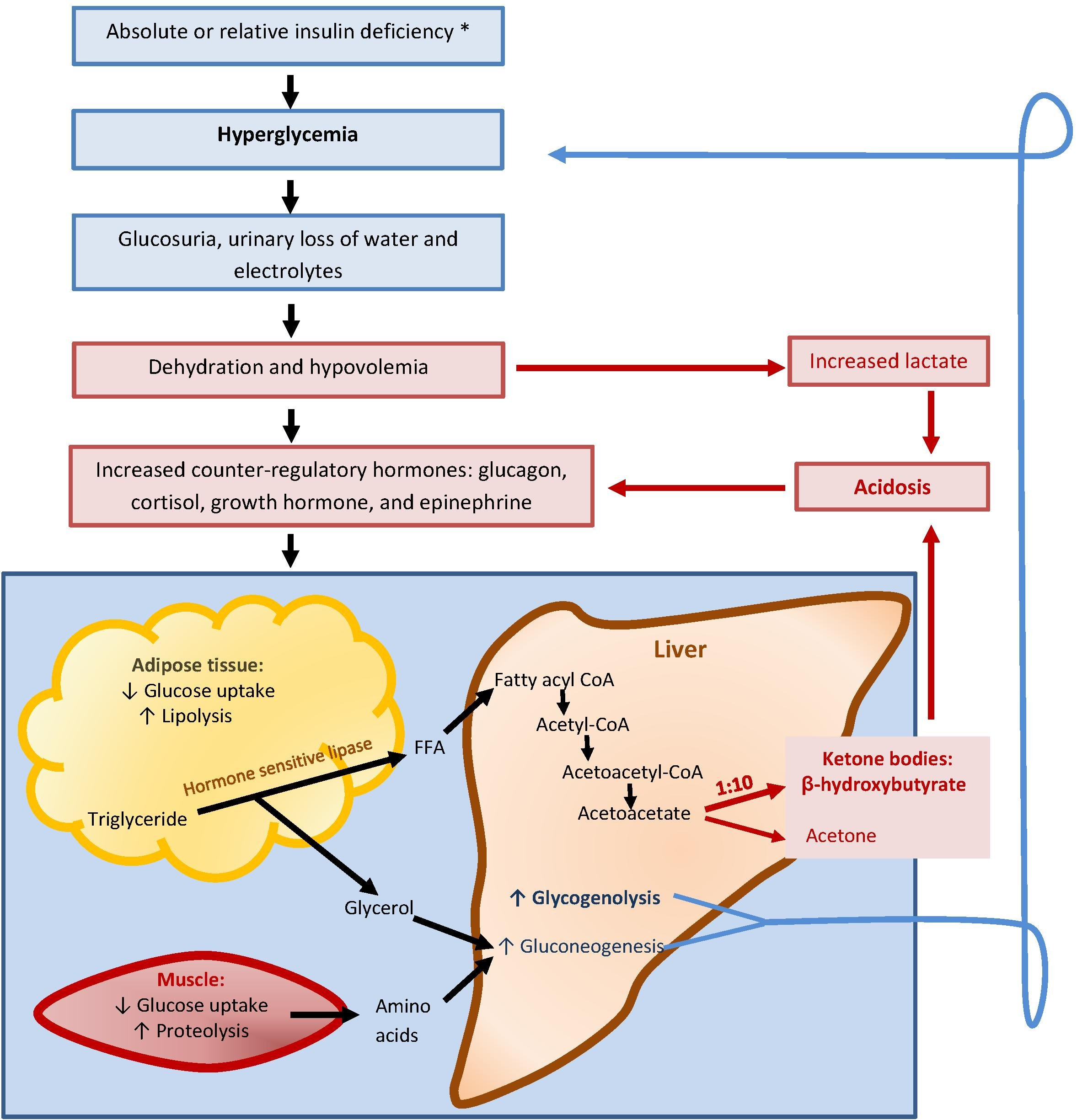 Diabetic Ketoacidosis In The Pediatric Population With Type 1 Diabetes
