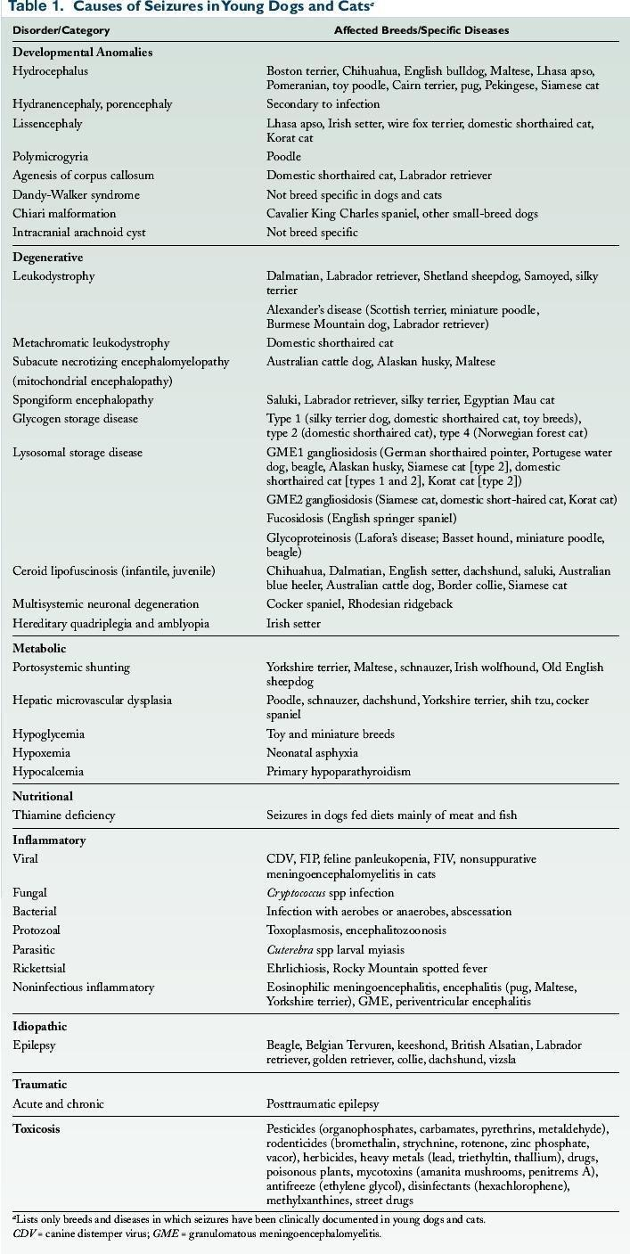 Seizures In Young Dogs And Cats: Pathophysiology And Diagnosis