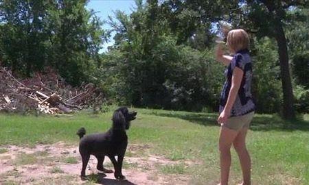 Diabetic Alert Dog Training Texas