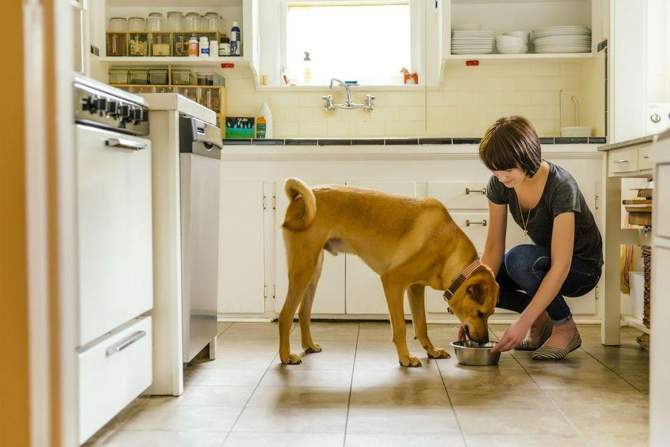 What Kind Of Food Should I Feed My Diabetic Dog?