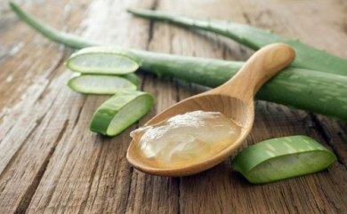 Cmo Usar El Aloe Vera Para Tratar La Diabetes   Informe21.com
