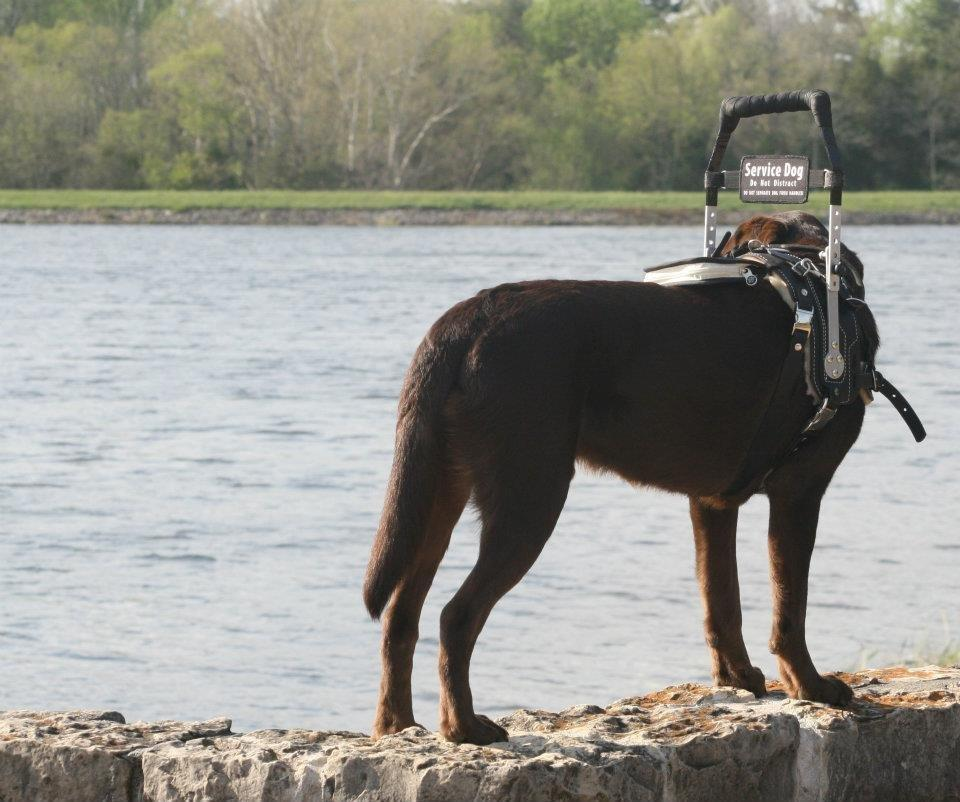Learn About The Different Types Of Service Dogs