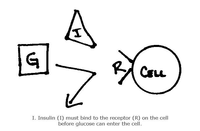 How Long Does It Take For Insulin Levels To Go Down?