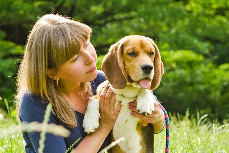 Diabetes In Dogs: Symptoms, Causes, & Treatment