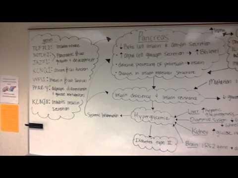 Diabetes Mellitus Type 2 Pathophysiology Schematic Diagram Market Drugs