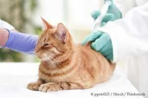 4 Signs Of An Impending Diabetic Pet Emergency
