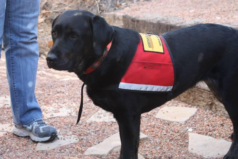 Diabetic Service Dog For Sale
