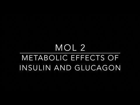 Metabolic Effects Of Insulin & Glucagon