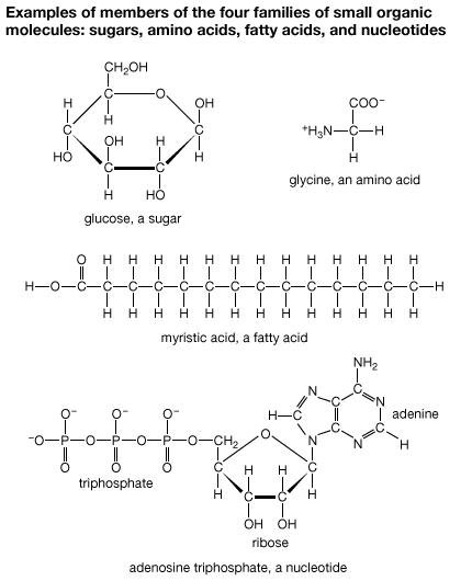 In Humans And Other Animals Where Does Glucose Come From