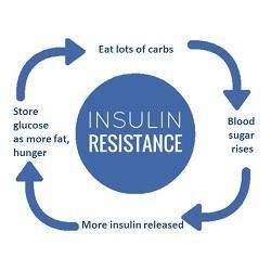 Where Insulin Acts