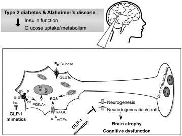 Review Crosstalk Between Diabetes And Brain: Glucagon-like Peptide-1 Mimetics As A Promising Therapy Against Neurodegeneration