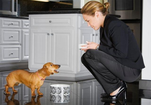 How Do I Help My Skinny Dog Gain Weight?
