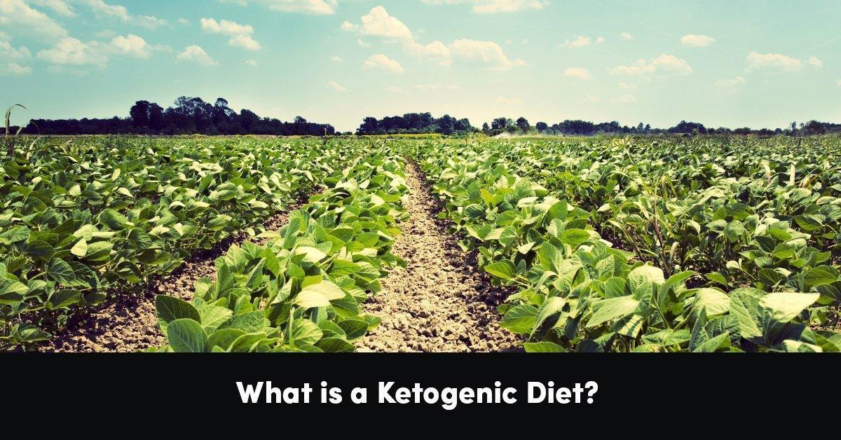 What Is A Ketogenic Diet? | Psychology Of Eating