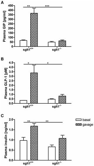 Which Sodium Glucose Transporter Is Thought To Mediate Glucose Uptake In The Intestines