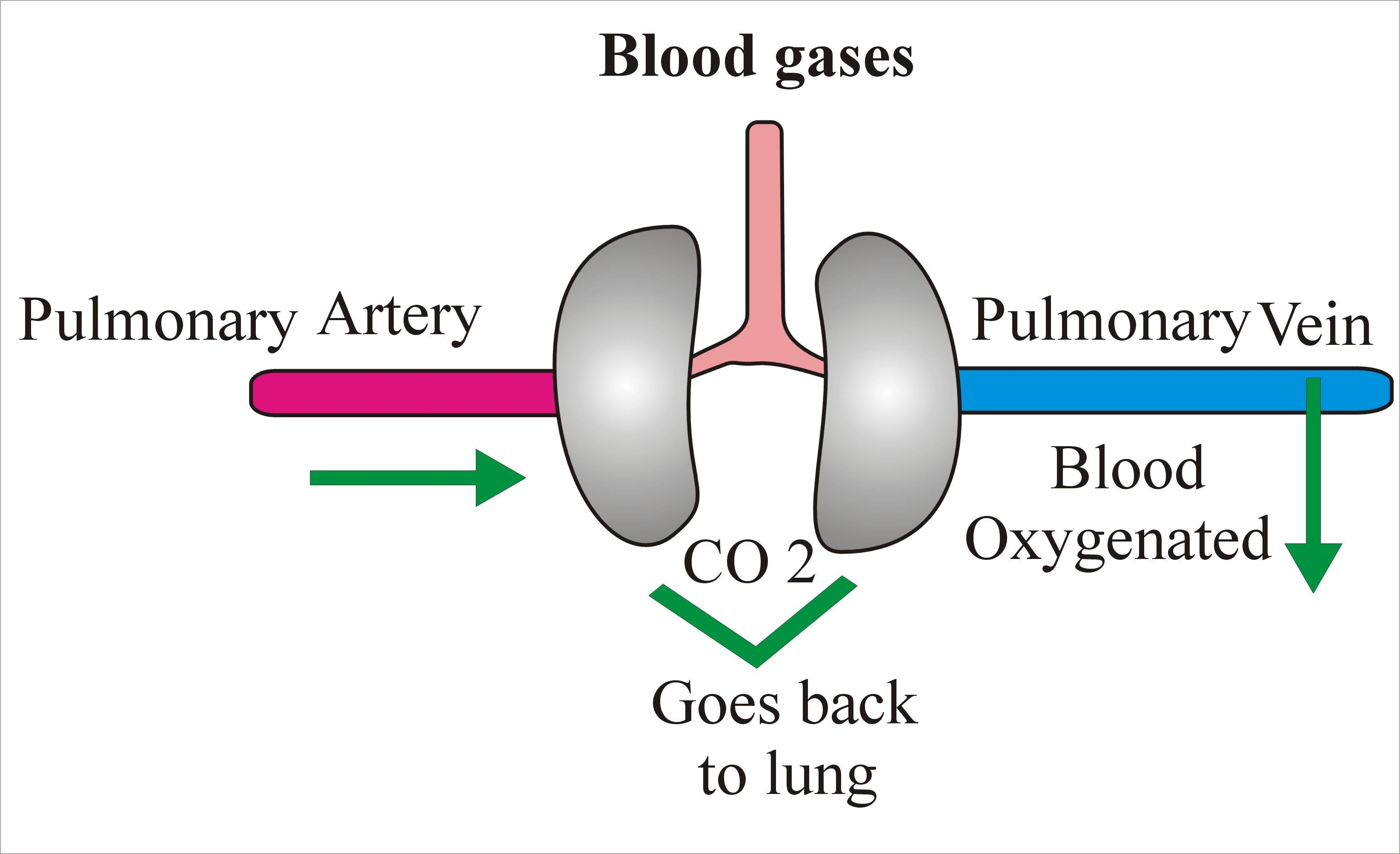 Arterial Blood Gases (blood Gases), Acidosis And Alkalosis
