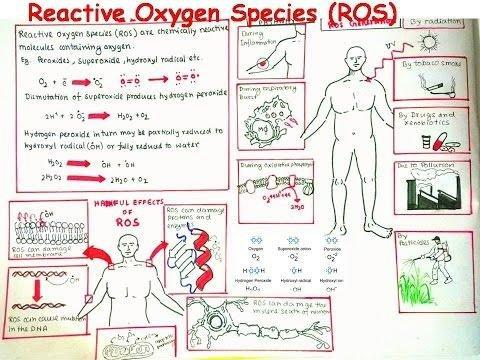 Role Of Reactive Oxygen Species In Injury-induced Insulin Resistance