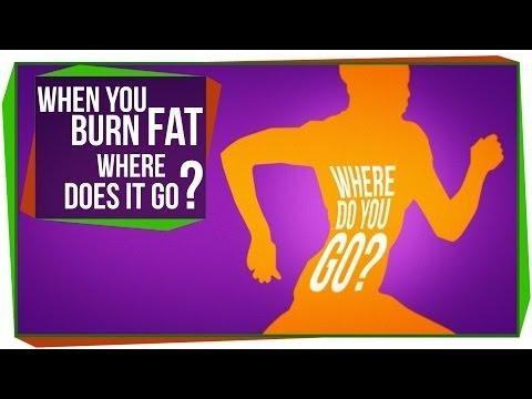 Can The Body Convert Fat To Glucose?