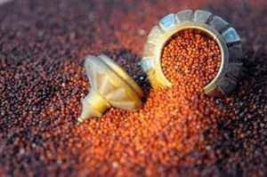 Ragi Benefits For Diabetes Patients: Ragi Meals And Ragi Recipes