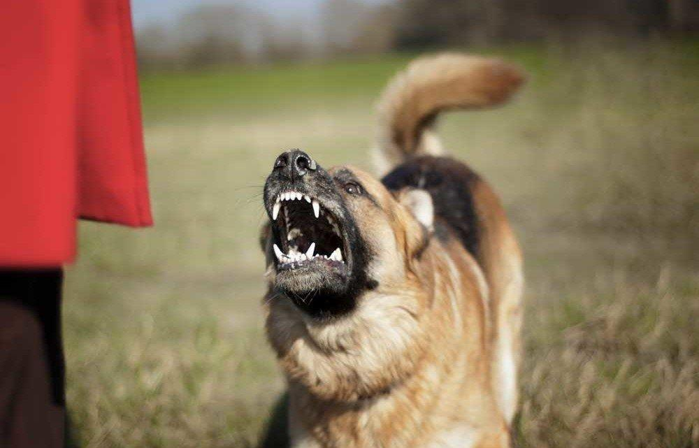 Why Is Your Dog Aggressive?