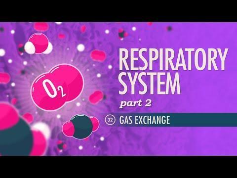 Why Does Copd Cause Respiratory Acidosis?