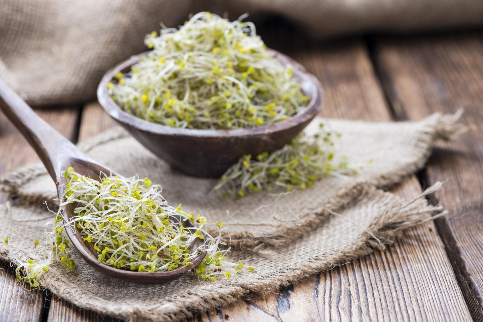 Could Broccoli Sprout Extract Be A Metformin Alternative For Type 2 Diabetes?