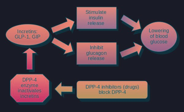 How Diabetes Medications Work