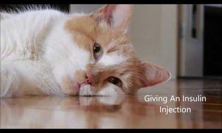 Diabetic Cat Skip Insulin