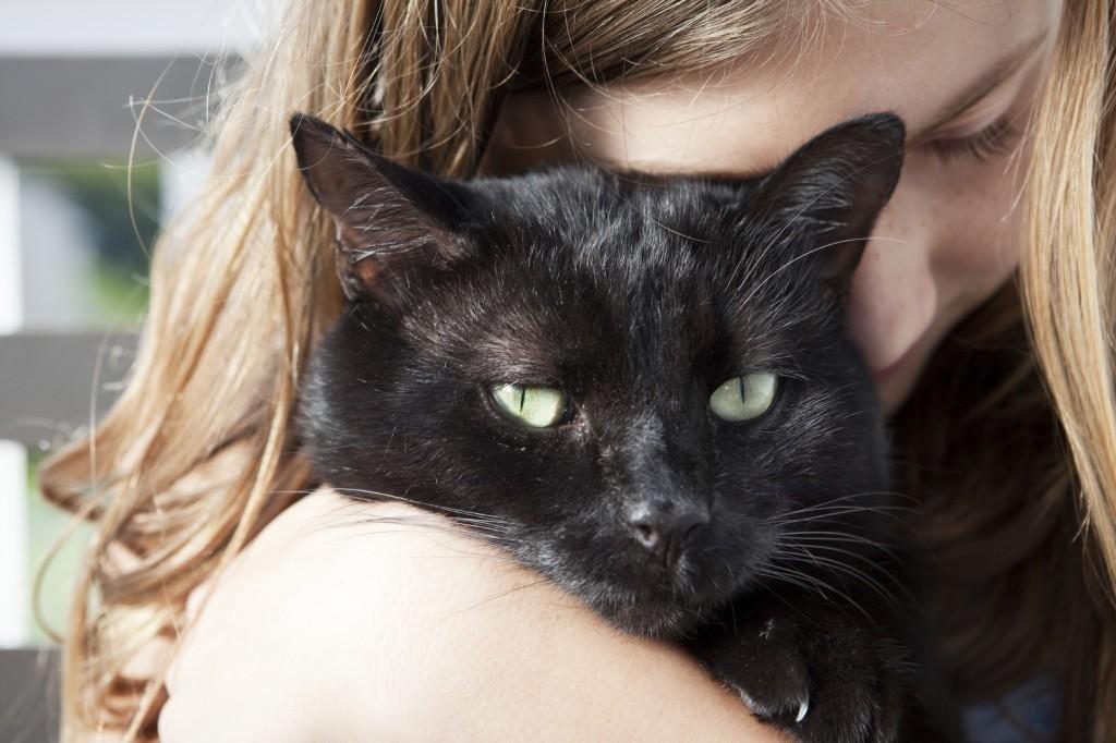 Managing Feline Diabetes