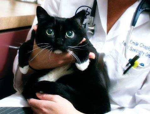 Insulin Overdose In Cats Symptoms