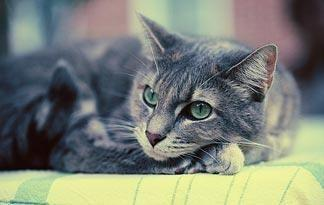 Can A Cat Recover From Diabetes?