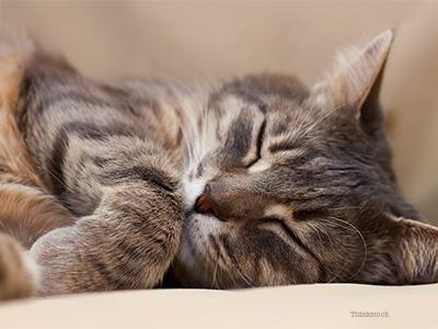 What Are Diabetes Symptoms In Cats