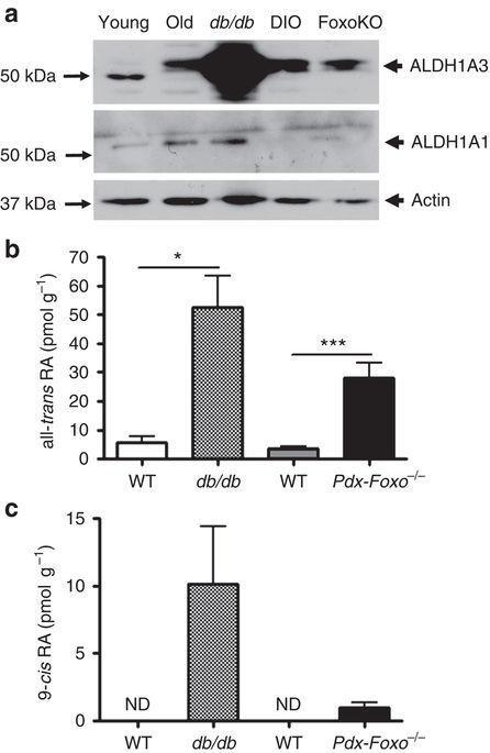 Aldehyde Dehydrogenase 1a3 Defines A Subset Of Failing Pancreatic Cells In Diabetic Mice