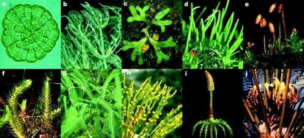 Photosynthetic Cells