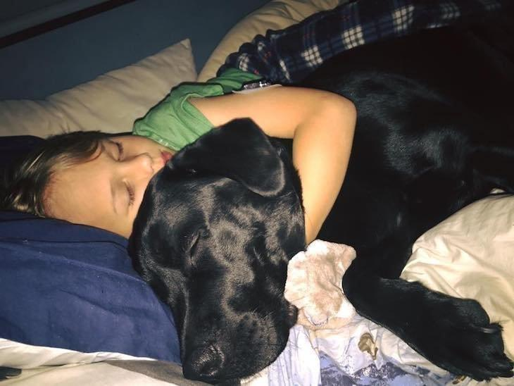 Dog Saves Boy's Life By Waking His Parents Up In The Middle Of The Night
