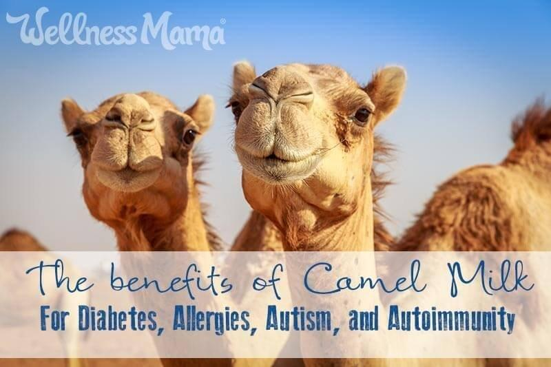 Benefits of Camel Milk: Low Allergen Alternative to Dairy