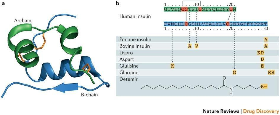 Pursuit Of A Perfect Insulin